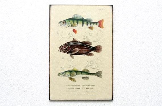 "Wooden Retro Wood Wall Art 8x12"" 20x30 cm, Fish Educational Board, Wall Hanger, Art Deco Room Decor, Natural History, Nursery room art"