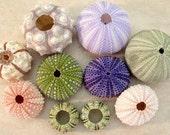 Seashell Collection 10 Sea Urchins Assortment