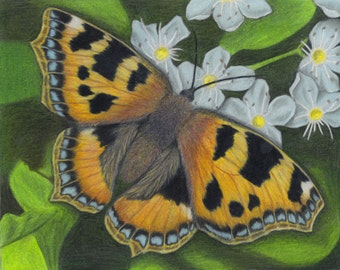 Butterfly 8x10-inch Giclee Print