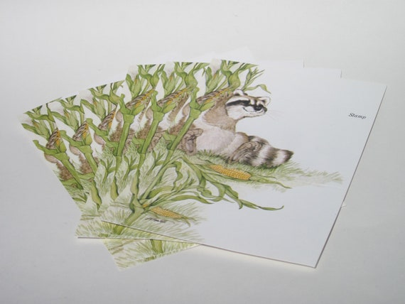 Just a Note -Raccoon in a Corn Field - Current Inc.-1970s - set of 6 - Vintage stationary / card - self mailer
