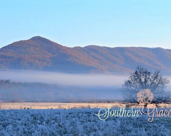 A Foggy Mountain Morning - Cades Cove Meadow - Cades Cove Tree - Landscape Photography - Great Smoky Mountains - 8x10 Photo