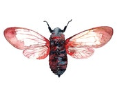Cicada Watercolor Illustration Print Handmade Decoration Red Blue Purple Nature