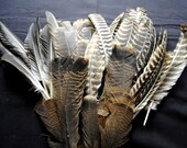 10 Wild Eastern Turkey Wing Feathers.