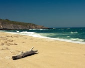 Driftwood summer sea photograph, Shark, Beach sand sea and cliffs 8x10 or 8x12
