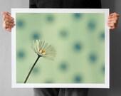 Daisy Flower Photograph, Living Room Decor Art, Macro Minimalistic Photography Print, Mint Blue and Mint Green  16x20