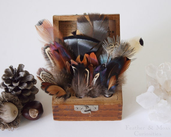 Feather collection with vintage vials and wooden box.