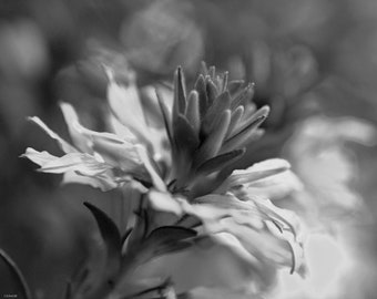Black and White Floral Bloom