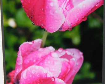 photo card, pink tulips. rain drops, garden, flowers
