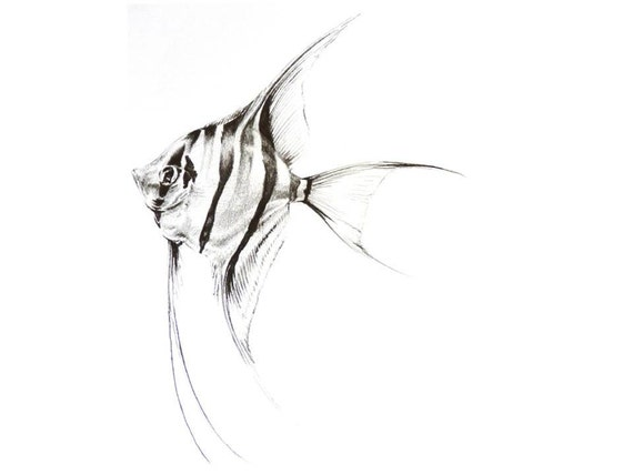 Fishes Pencil Drawing Angel Fish Drawing in Pencil