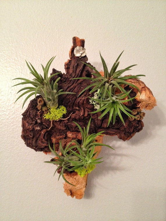 Air Plant And Moss Wall Garden Living Wall Art A Unique
