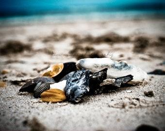 Seashells-Figure 8 Island, Wilmington, North Carolina-Color-Fine Art Photography-Other Sizes Available