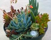 Succulent TERRARIUM, DIY Succulent Cuttings, Wedding Centerpiece, DIY succulent, Succulent containers,