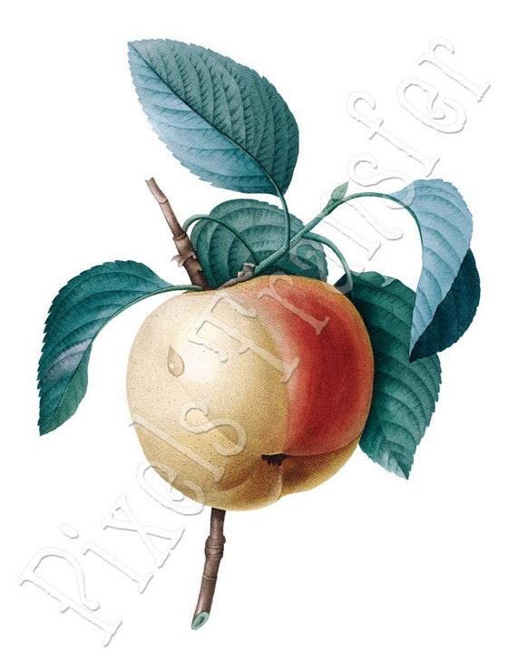 APPLE Instant Download autumn Digital Downloads digital collage sheet fruit clipart 174