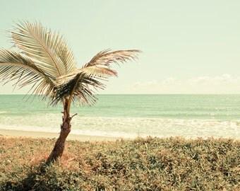 Beach photography Digital Download Coastal Art Beach decor Coconut Palm Tree Sunny day Seashore pale green wall art