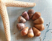 10 Small Pastel Colored Cone Shells from Kauai- Natural Hawaii Sea Shell Beads- Jewelry Supplies(S276)