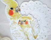 Card - Cockatiel Mother and Child