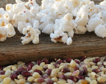 Confetti Gourmet Popcorn Kernels Kansas Grown 1 pound