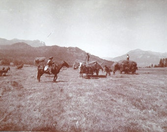 1800s to Early 1900s ORIGINAL Cowboy Photograph 12 X 4 1/2