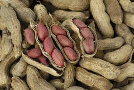 Grow Your Own Peanuts, Easy to Grow, Seeds, Container Gardening, 10 Seeds
