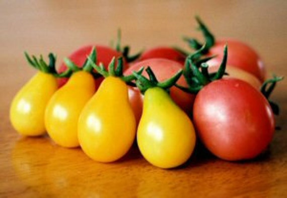 Heirloom, Yellow Pear Tomato, Garden Seeds, Great in Salads, 10 Seeds