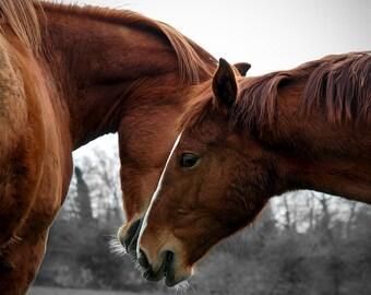 Horse photo, chestnut horse, animal photography, romantic decor, love, valentine art, heart,