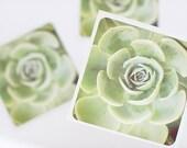 Set of 3 cotton 5x5 Succulent Prints