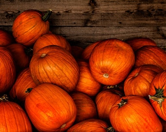 "Orange ""Fall Pumpkin"" Photograph Print, 8x10 (or larger) Fine Art Photography, Fall Wall Decor"