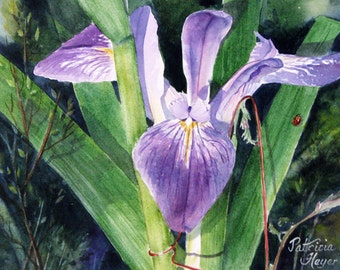 ACEO Fine Art Print Of Original Watercolor / By Patricia Heyer Of A Blue Flag Iris / Size 2.5x3.5 inches.