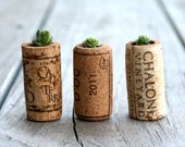 Lauren, Matt and Tim - A Swashbuckling Pack of 3 Succulents In Upcycled Cork Planters