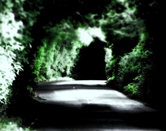 Dublin Landscape Road Photography Tunnel Vision Home Decor Print