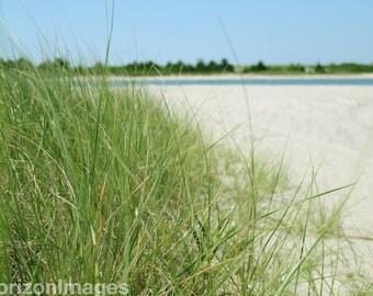 Grass on Beach Photo 8 X 10