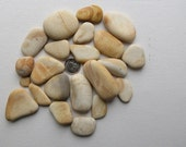 Sea Pottery Pieces For Mosaics Jewelry Terrarium Aquarium Double Extra Large