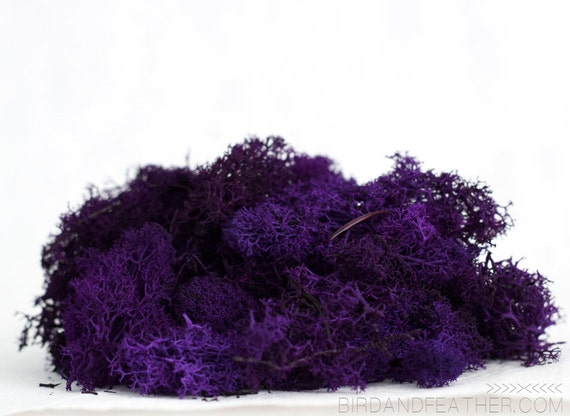 Reindeer Moss: Purple, 1oz