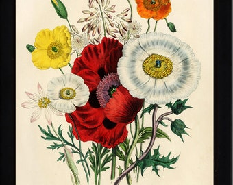 BOTANICAL PRINT Loudon Flower  Botanical Art Print 4 Beautiful Antique Red White Orange Yellow Poppy Pollies Bouquet Spring Garden
