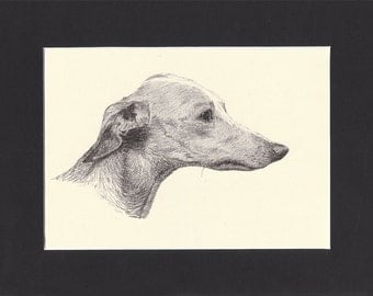Italian Greyhound Vintage Toy Dog Print C.Francis Wardle 1935 Drawing Mounted with Mat Italian Greyhound Print Greyhound Dog Print
