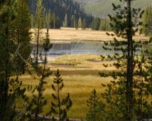 Nature Photograph, Yellowstone Landscape, Pine Trees, Lake Photography, Home Office Wall Decor, Fine Art Photography, Mountains, Nature, Art