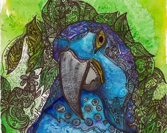 BLUE HYACINTH MACAW Tribute 11x14