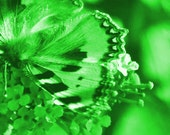"""The """"green"""" butterfly from the series """"dealan-dè"""" (Gaelic Butterfly)"""