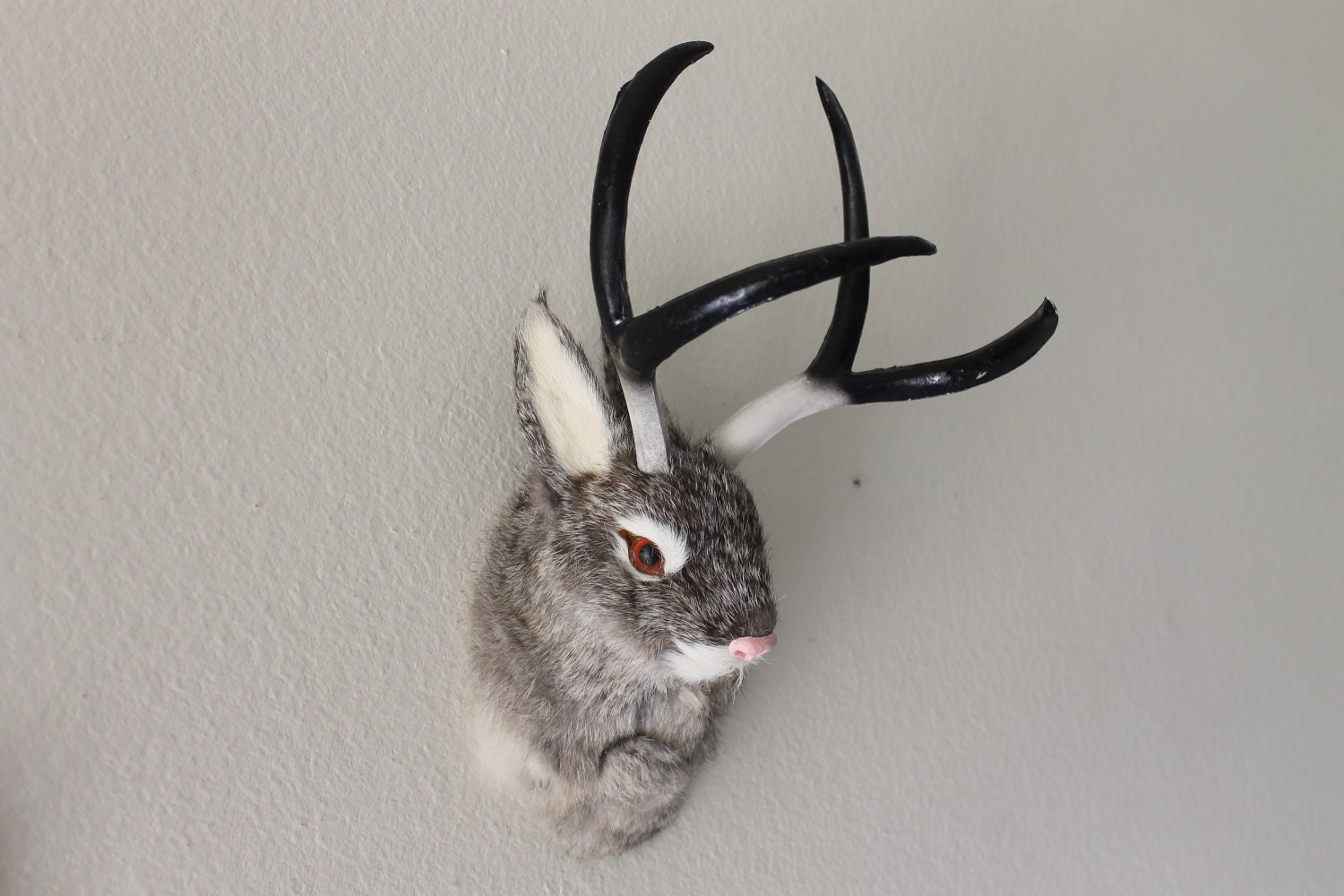 Are Jackalopes Real  Ye Olde Curiosity Shop