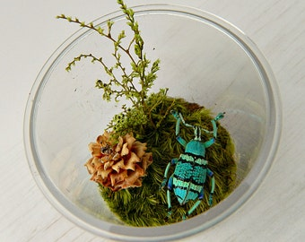 Bug Terrarium Kit for Child, Real Dried Insect Specimen in Acrylic Jar, Eco Friendly, Gift for Boys, Hands On, Creative Play, Nature Outdoor