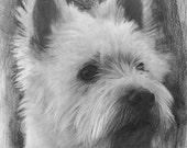 Custom Pet Portrait Drawing, Original 8 x 10