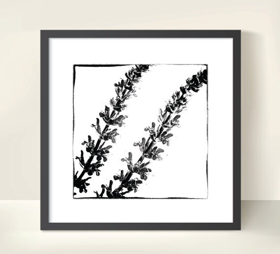 Salvia Blossoms. Monochrome. Nature Photography. Botanical Print by OneFrameStories.