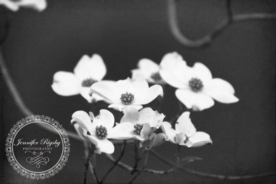 Flower Photography  Wall Art Prints