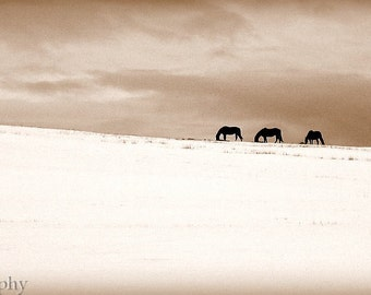 Winter Horses - Montana Made Blank Greeting Card, 100% recycled paper
