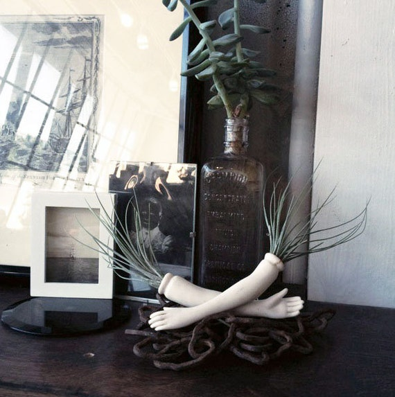 limb garden // air plant // doll parts
