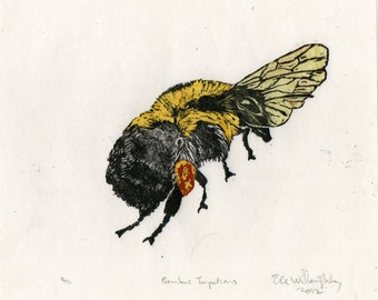 Bombus Impatiens Bumblebee Linocut - Lino Block Print Illustration of a Bumblebee, Bee, Insect, Bee Biodiversity Collection
