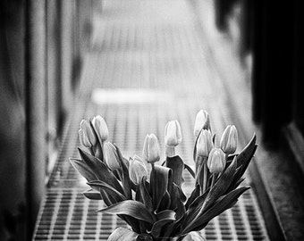 Vernal Feelings 4x6 inches fine art photograph A bouquet of tulips Floral art in black and white Flower wall decor Tulip photo