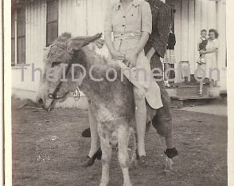 Vintage Photo, Women on a Donkey, Ass, Now They Need to Get off, Black & White Photograph, Circa 1950's Democratic Ass