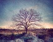 Winter wonderland, Blue Winter Photography, Blue decor, Nature photography, Tree photography, Dreamy rustic woodland, Wall art
