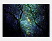 Nature Photography, dark blue, meteors, stars, trees, lights, Comets and Meteor Showers, whimsical fine art photography print 8x12